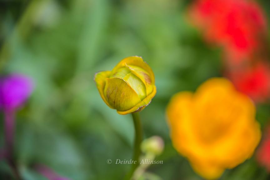 PicturesByDeirdre-0151
