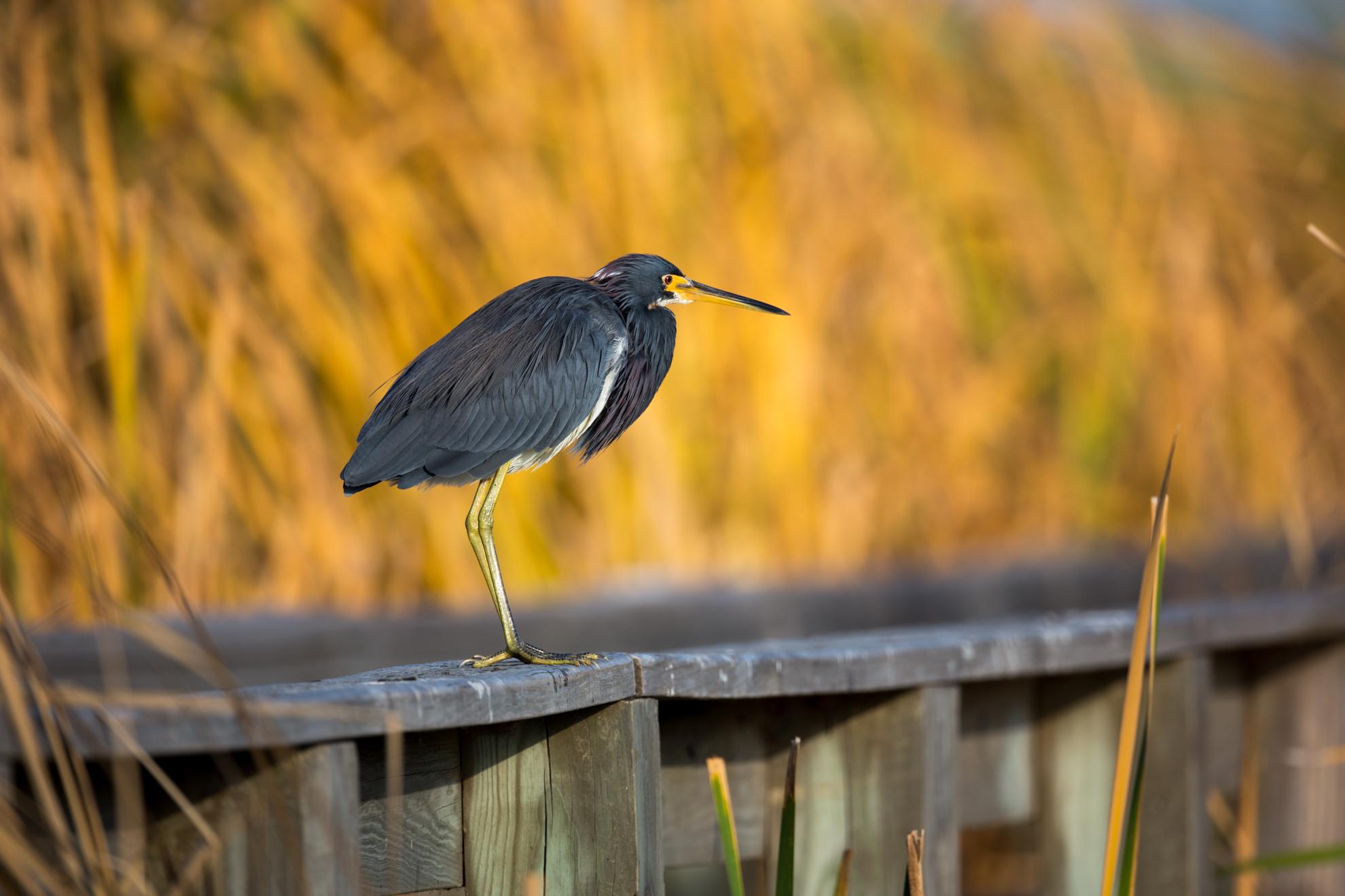 bird photograph-6319