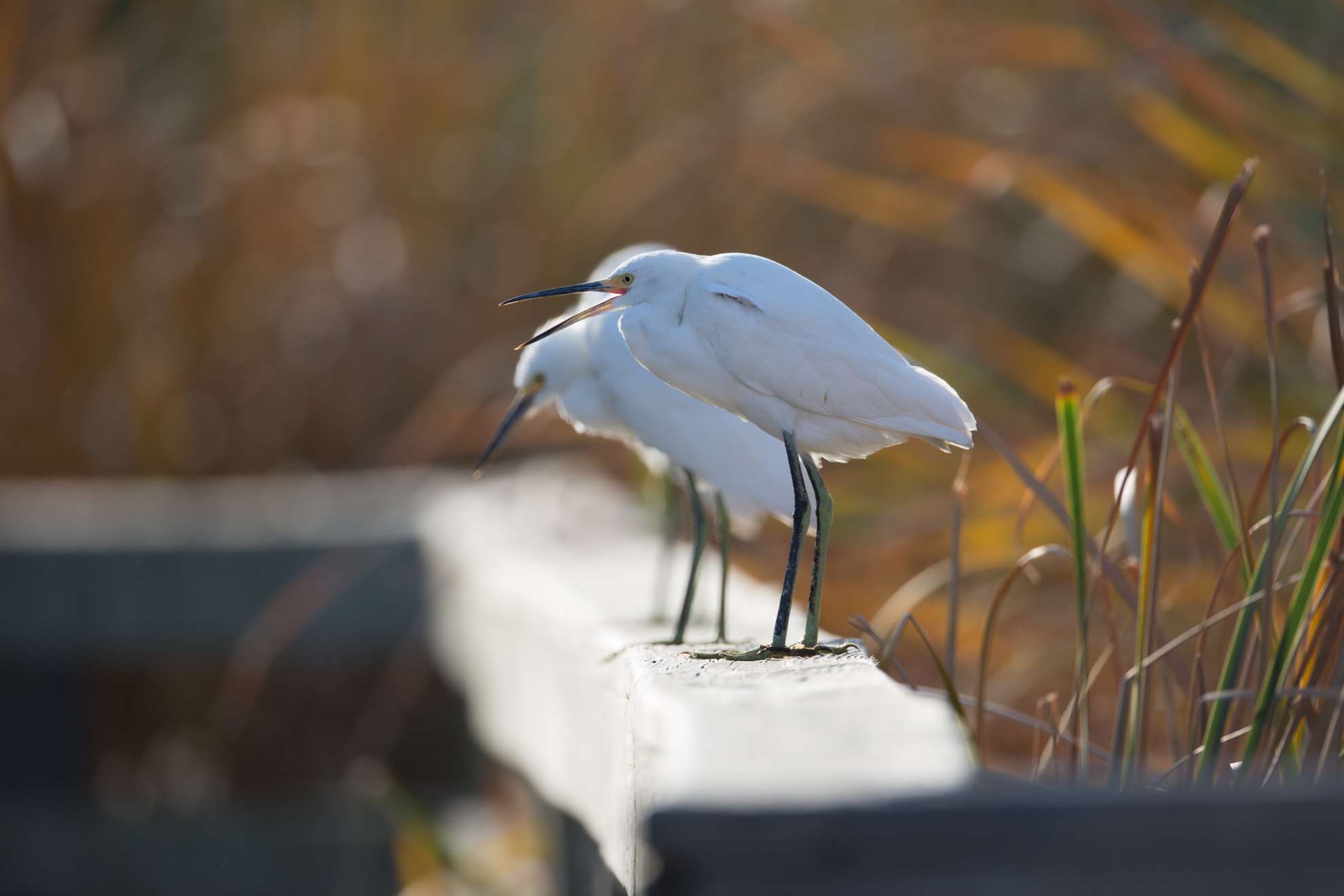 bird photograph-6418