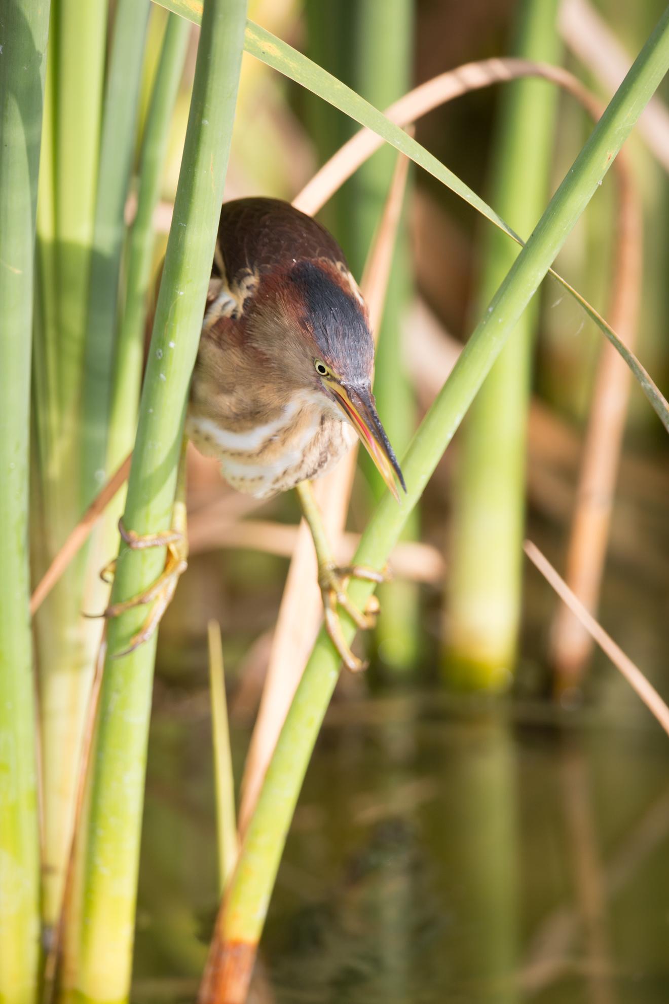 bird photograph-8621