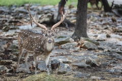 deer photograph-2-2