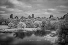 A Quiet Glimpse of Central Park